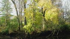 Autumn Trees on the Bank Stock Footage