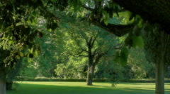 Summer Sun Lit Park Tree - 29,97FPS NTSC Stock Footage