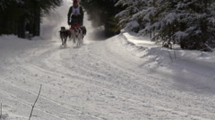 Sled dogs racing Stock Footage