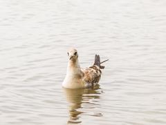 Young seagull Stock Photos