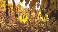 Autumn, leaf fall Stock Footage