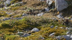 High altitude vegetation in the alps Stock Footage