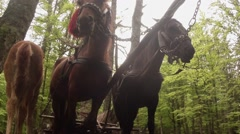 Horse-drawn carriage in standing against the background of the forest from below Stock Footage