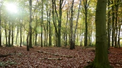 Autumn Forest Time-Lapse HD - stock footage