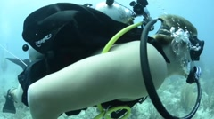 Military Divers under water footage Stock Footage