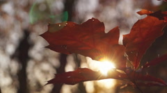 Autumn, leaf fall Stock Footage