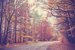 Retro filtered picture of a road in autumnal forest. Stock Photos
