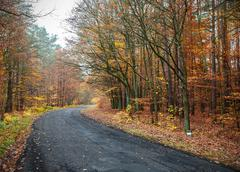 the picture of a road in autumnal forest. - stock photo
