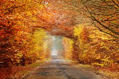 Stock Photo of road in a misty autumnal forest, intense colors filtered.
