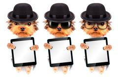 Dog dressed as mafia gangster with tablet pc - stock photo