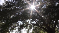 Sun Shining Through Oak Trees Stock Footage