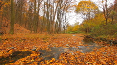 Stream running through autumn forest floor covered with dry leaves Stock Footage