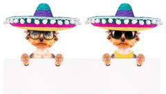 Dog wearing a mexican hat with banner Stock Photos