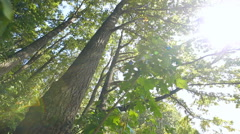 Deciduous forest, trees and sun Stock Footage