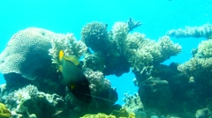 Lively underwater coral  reef colony scene Stock Footage