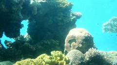 Lively underwater coral  reef colony scene - time lapse 1 Stock Footage