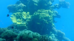 Lively underwater coral  reef colony scene - time lapse Stock Footage