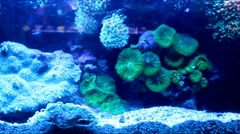 Lively underwater coral  reef colony scene - slow motion HD Stock Footage