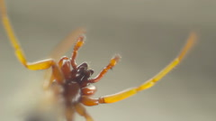 Closeup of Spiders underparts copy space on right - stock footage
