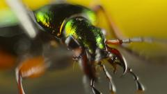 Creepy closeup of green beetle head Stock Footage