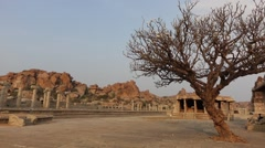 Lone tree near Vittala Temple Stock Footage