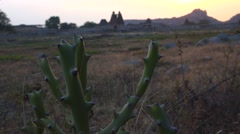 Cactus nearby Vittala Temple during sunset Stock Footage
