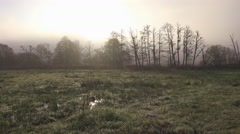 Autumn Forest Landscape Cold Misty Scenic Nature Background Stock Footage