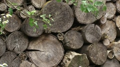 Insect hotel - structure of logs with drilled holes  - full screen Stock Footage