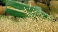 Stock Video Footage of Focus on Canola Plant as Headt Passes By