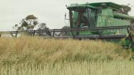 Stock Video Footage of Passing Header Swathing a Canola Crop on an Australian Farm