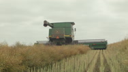 Stock Video Footage of Swathing a Canola Crop for Harvest on an Australian Farm