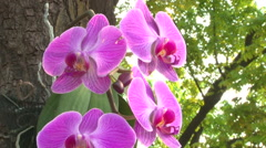 Purple orchid HDV to HD Stock Footage