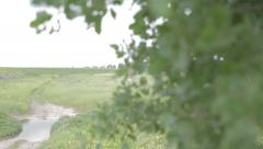 Turn left from a tree to little pond Stock Footage