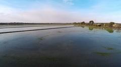 Flight over rice farm Stock Footage