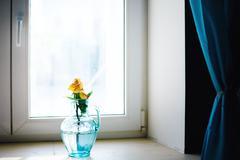 rose flower in blue vase near window - stock photo