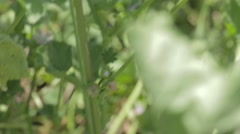 An insect flying from a leaf - stock footage