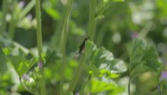 A large insect walking on a blade of grass Stock Footage