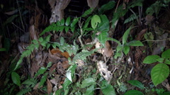 Time-lapse of a large orb-web spider making a web  Stock Footage