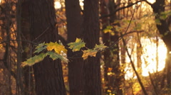 leaf fall, forest - stock footage