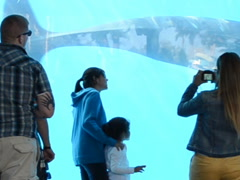 Audience watches whales. Related clips are in my portfolio in 1920x1080. Stock Footage