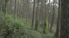 A pine forest - pine trunk Stock Footage