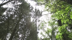 Mediterranean forest - pines, fig trees, climber plants Stock Footage