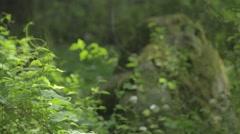 Mossy rock alongside green plants Stock Footage