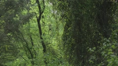Dens forest Stock Footage