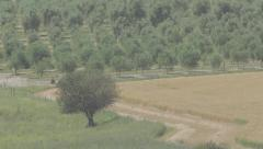 An olive grove Stock Footage