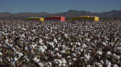 4K Colorful Cotton Bales Flank Farm Field - stock footage