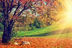 Landscape with a tree full of colorful, falling leaves Stock Photos