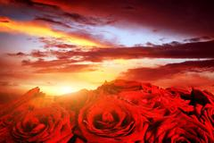 Red wet roses flowers on dramatic sunset sky Stock Photos