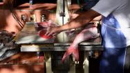 Stock Video Footage of Cutting Fish 1