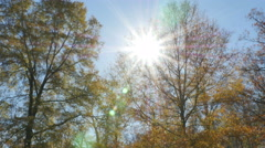 2563 People at Park During Fall with Sun Flare, 4K Stock Footage